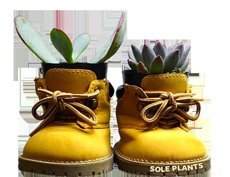 sole plants